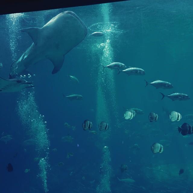 Beautiful ourproject52 project52 blue georgiaaquarium