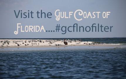 Visit the gulf 449